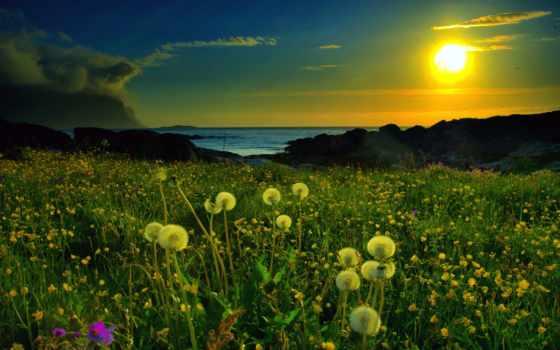 природа, одуванчики, озеро, поляна, закат, картинка,