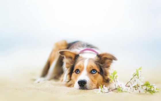 собаки, широкоформатные