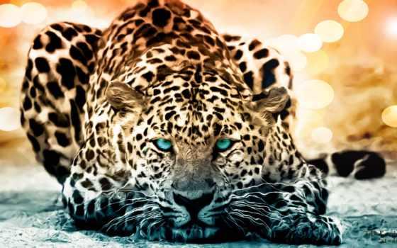 zhivotnye, два, большие, работать, ягуары, ingame, кошки, eyes, have, художественное, волка,