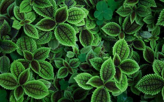 природа, листва, ultra, растение, desktop, mac,