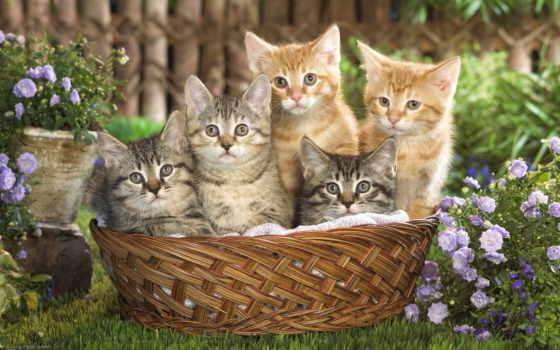 котята, кошки, животные