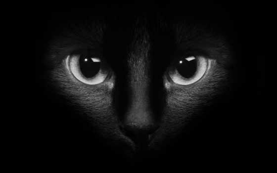 gato, ojos, negro, stock, oscuridad, del, fotos, foto, imágenes,
