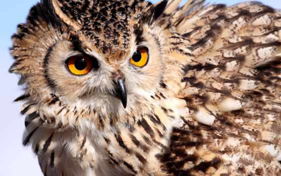 филин, сова, свет, перья, птица, широкоформатные, окрас,