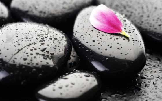 color, black, камни, люблю, янв, капли, more, цветы, орхидея,
