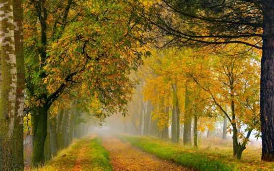 otoño, flickr, caminos, photos, con, que, fotos, más, bocanada,
