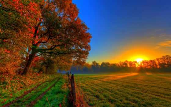 осень, природа, красивые, tochka, oboi, золотая, fondos,