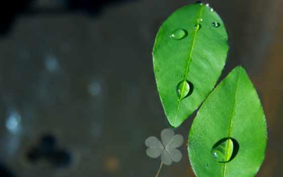 растение, цветы, water, public, drip, природа, дерево, leaf, плод, domain, дождь