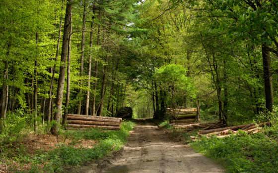 лес, дорога, брёвна, картинка, природа,