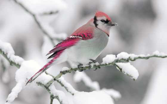 birds, snow, cute