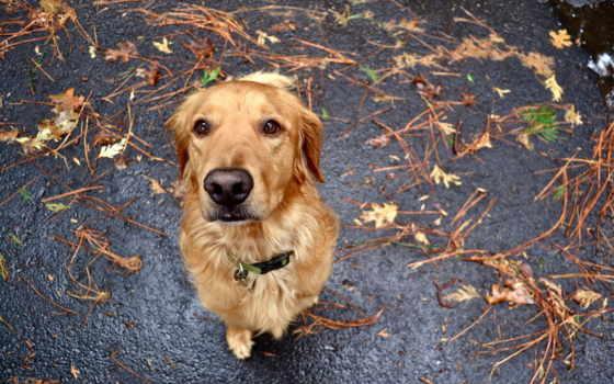 собака, devotion, problem, всяких, без, этом,