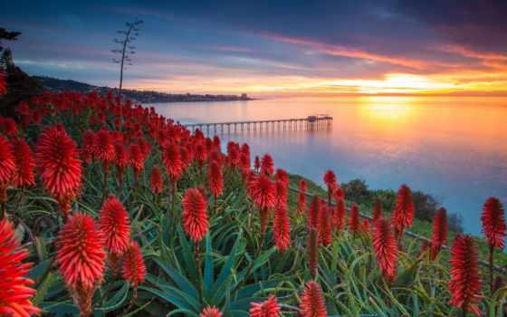 цветы, золотого, ray, солнца, красавица, море, пирс,