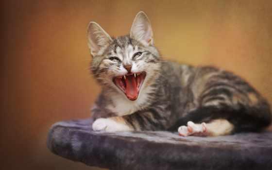 кот, забавно, смешно