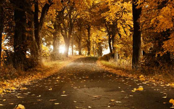 otoño, hojas, del