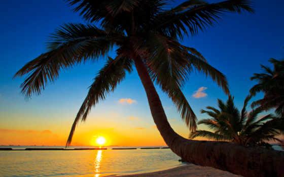 закат, maldives, sun, море, ocean, небо, мальдивах, palm, картинка, закаты,