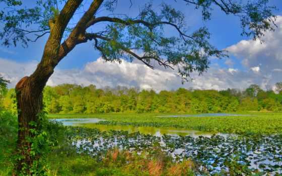 природа, категория, сайте, добавив, указав, качество, нашем, улучшить, качественные,