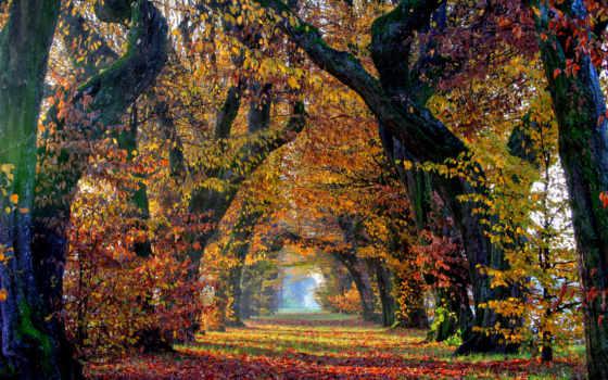 изображение, drzewa, aleja, liście, jesień, tapety, листва, аллея, осень, картинка,
