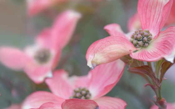 cvety, красивые, цветы, бесплатные, house, широкоформатные, солнца, яркие,
