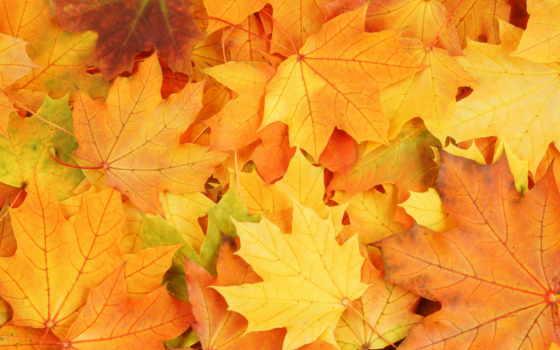 осень, листва, яркие, краски,