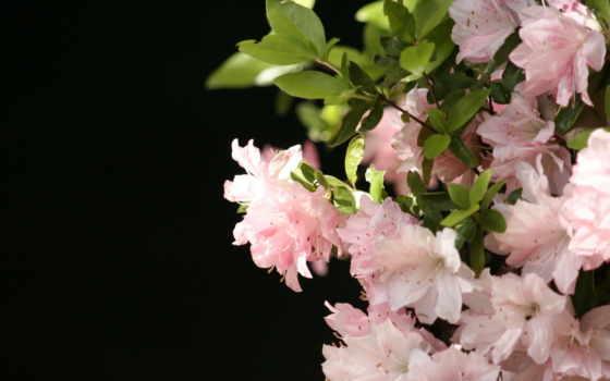 tapety, kwiaty, pulpit, darmowe, top, природа, dla, przyroda,
