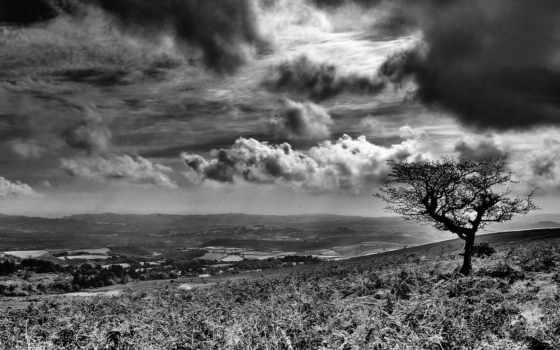 white, black, landscape Фон № 75555 разрешение 1920x1200