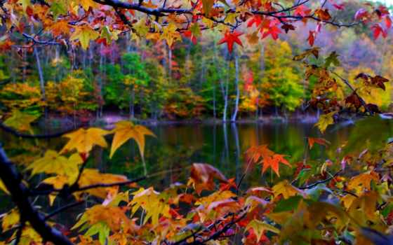 осень, природа, листва Фон № 134532 разрешение 1920x1200