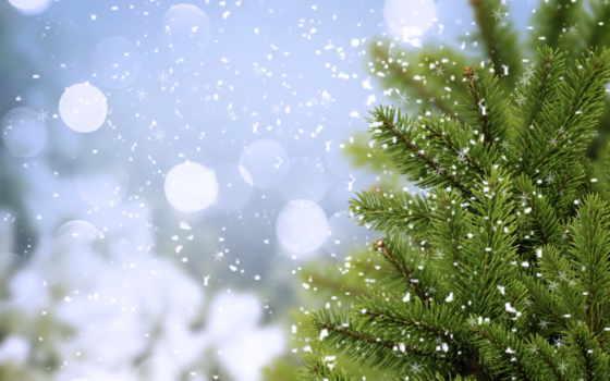 winter, снег, разделе, time, года, этом, possible, снежинки, елочка, елочки,