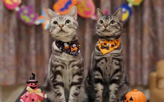 halloween, праздники, праздник, картинка, коты,