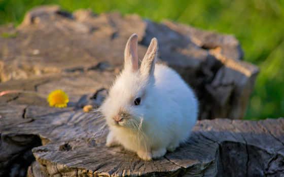 кролик, white, цветы