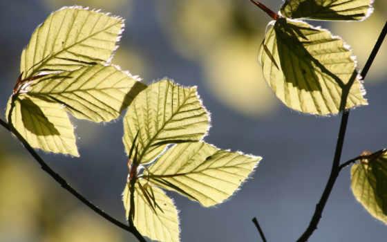 sunlight, leaves