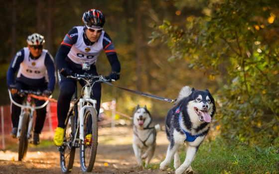 велоспорт Фон № 27312 разрешение 2560x1600
