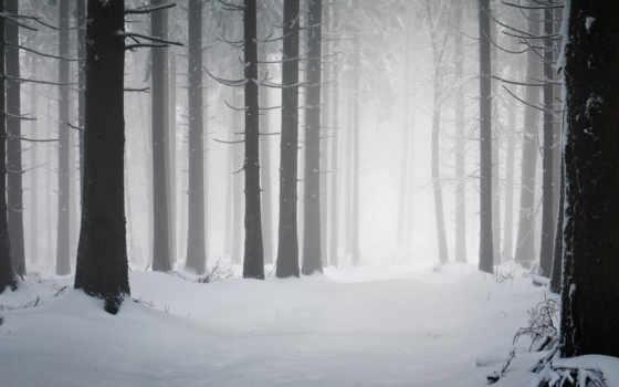 снег, лес, winter