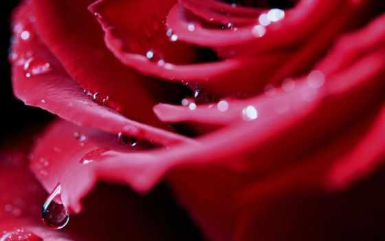 роза, лепестки, бутон Фон № 80694 разрешение 2560x1440