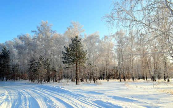 природа, картинка, года, времена, деревя, снег,