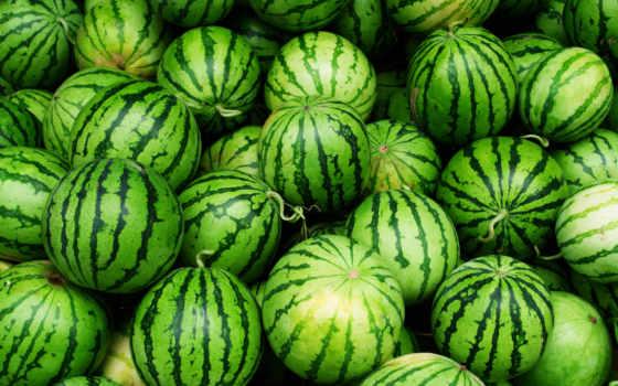 арбуз, арбузы, choose, киргизский, об, nutrition, договорным, ценам, купить, арбуза,