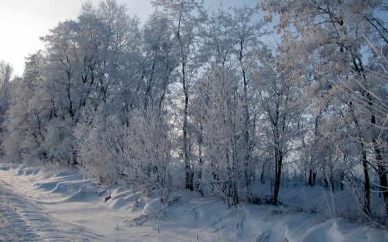 иней, winter, зимние, фоны, красивые, цитатник, свой, community, снег,