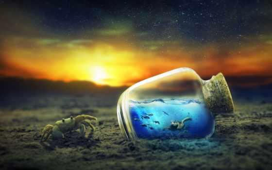 бутылка, черепаха, бутылке, crab, life,