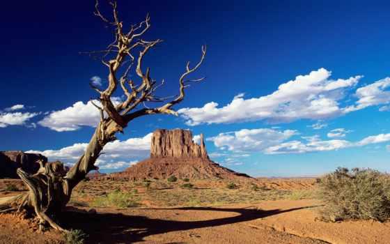 красивая, природа, business,