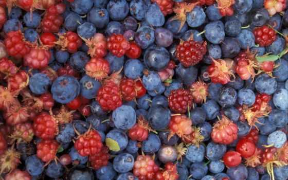 ягоды лесные, berries