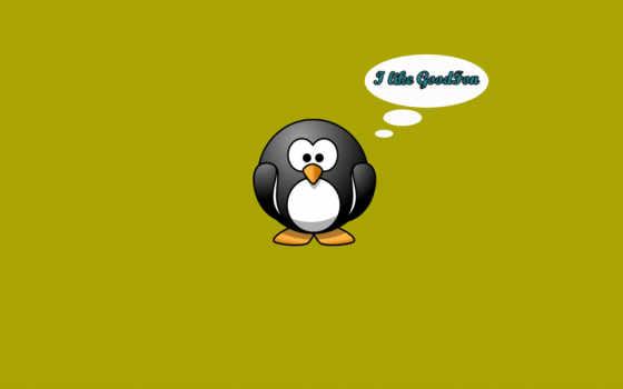 пингвин, картинка, пингвины
