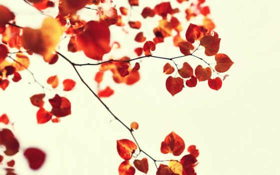 листья, osen, веточки, белый,