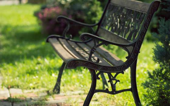 скамейка, природа, травы