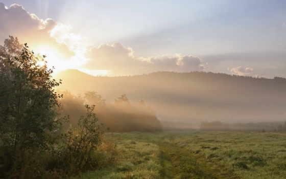 утро, поле, туман