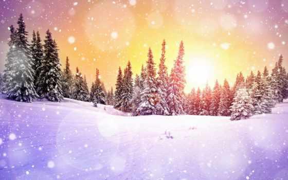 winter, зимние, лес, ночью, год, архангельск, узоры, сказочные, new, again,