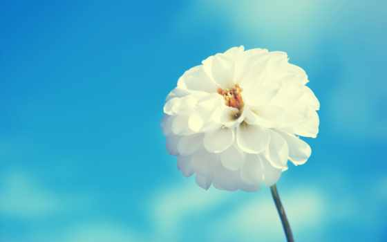 цветы, flowers, amazing, images, free,