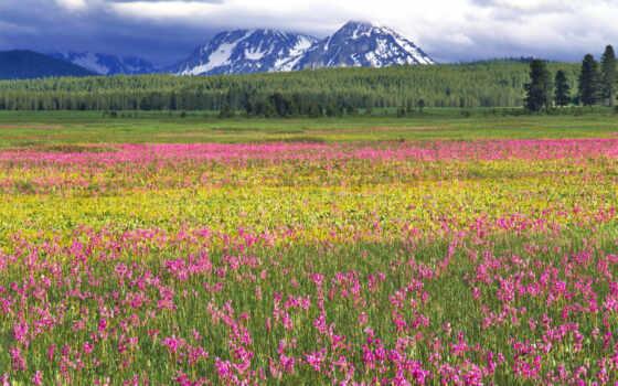 cvety, поле, салатовый, горы, яркий, trees, many, розовый, лес, oblaka,