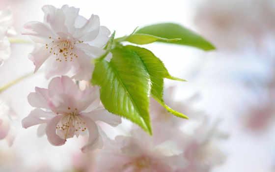 нежное, природы, цветение, есмь, красивые, мар, zitah, темы,