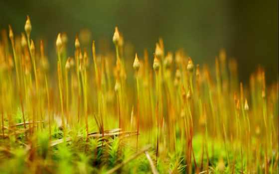 природа, пшеница, растение, mobile, landscape,