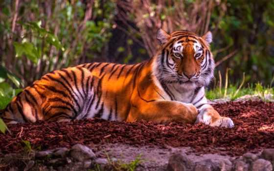animal, категория, downloads, images, home, фон,