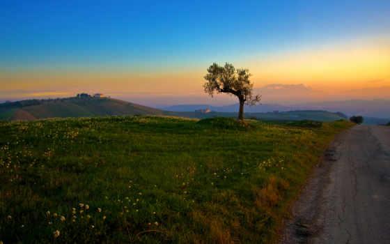 дерево, природа, trees, закат, landscapes,