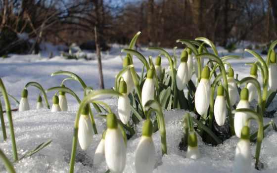 весны, дней, но, martha, весной,